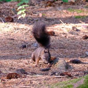 Eichhörnchen, Squirrels